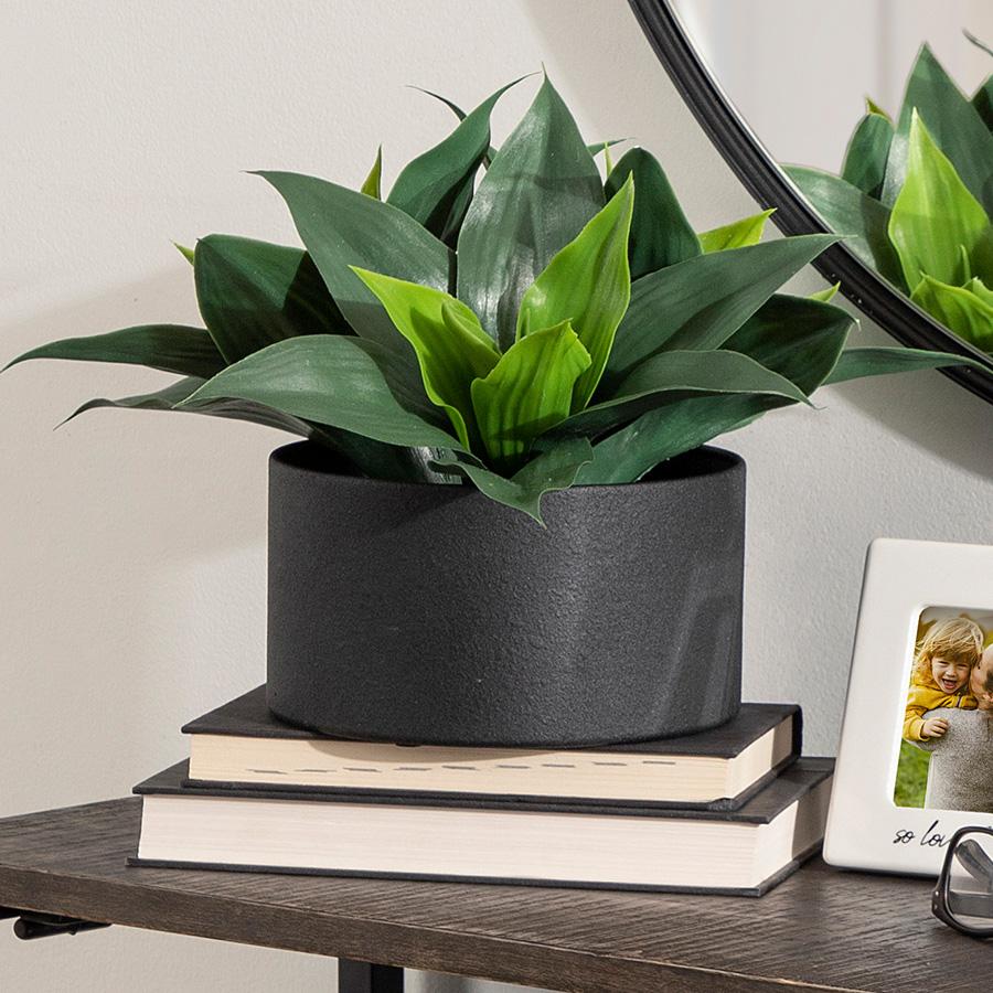 Big leafy green plant in black pot